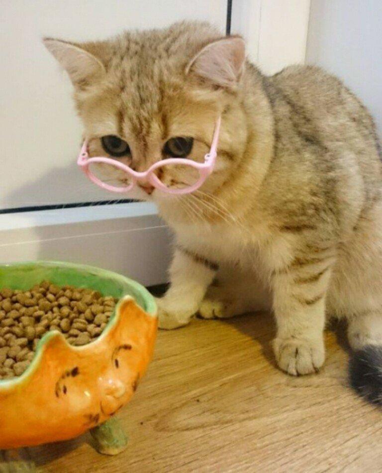 Годовщине свадьбы, картинки смешные кошки и котята и коты до слез