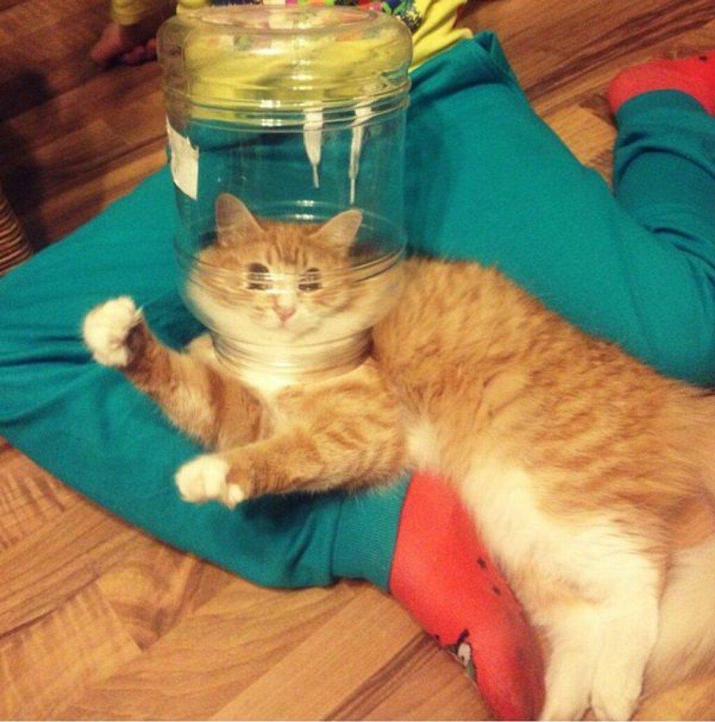 Фотки смешных кошек до слез