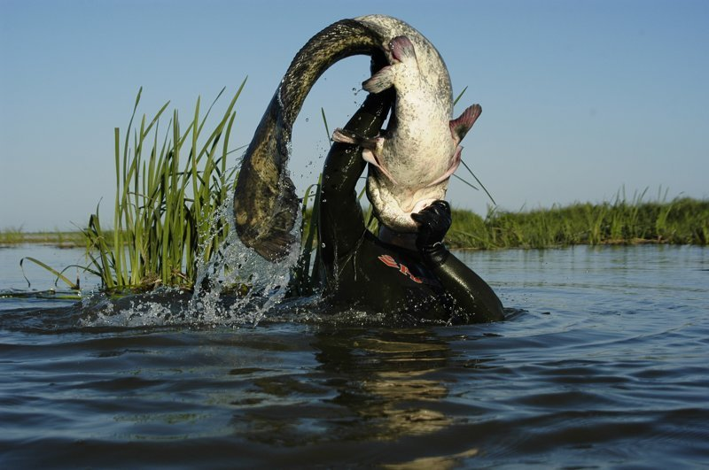 Рыбалка астрахани в дельте волги