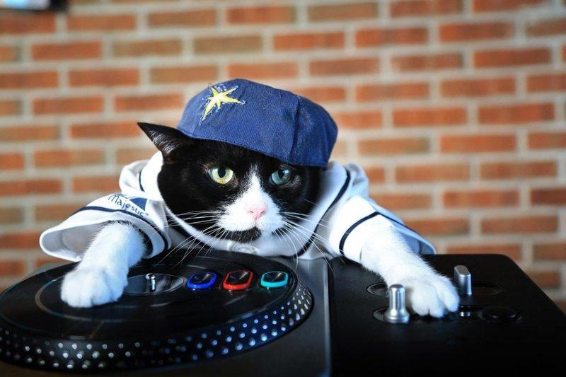 прикольные картинки крутые коты