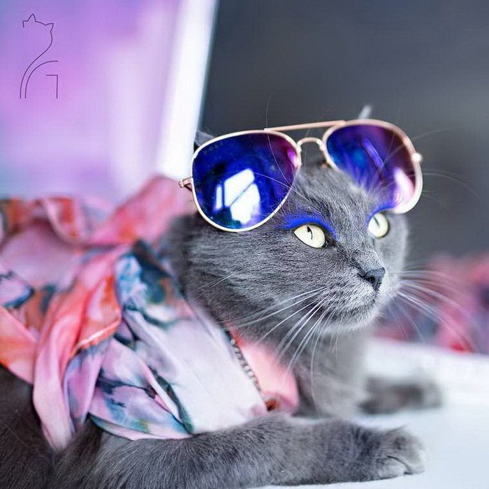 картинки элегантный кот выкладывает