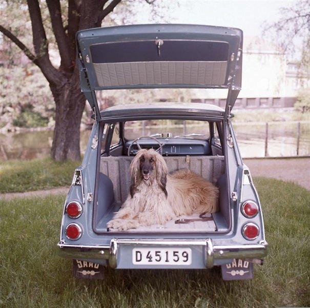 2. 60-е годы, автомобили, легковой автомобиль, старые машины, старые фото, сша, универсал, фургон