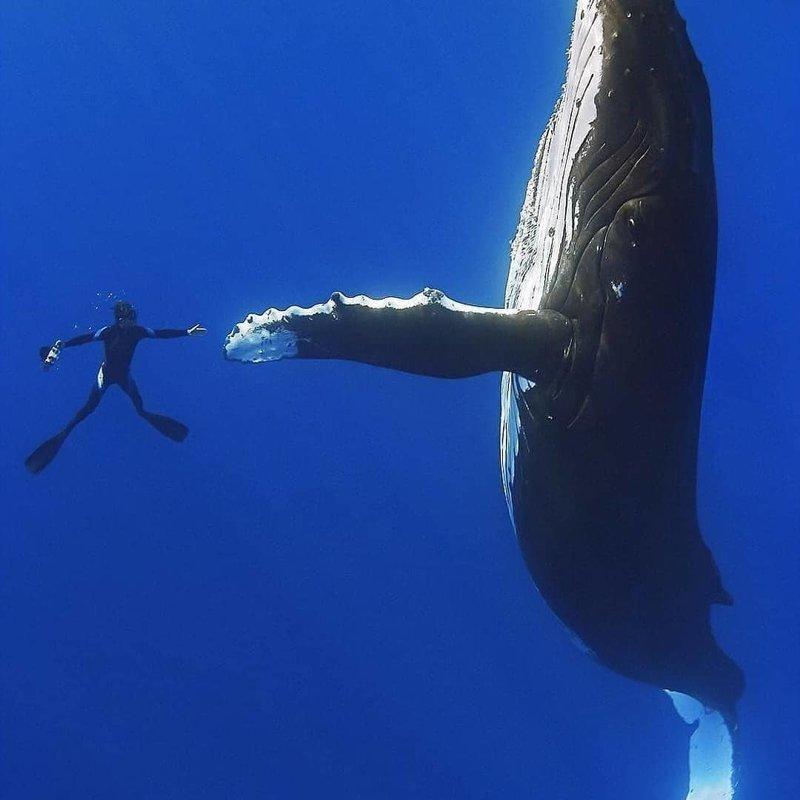 Удивительные фотографии, которые были сняты под водой красивые фотографии, под водой, подводные фотографии, подводный мир
