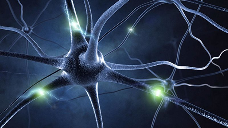 4. Дежавю связано с ошибкой в работе систем памяти Дежавю, мозг, наука, память, психология