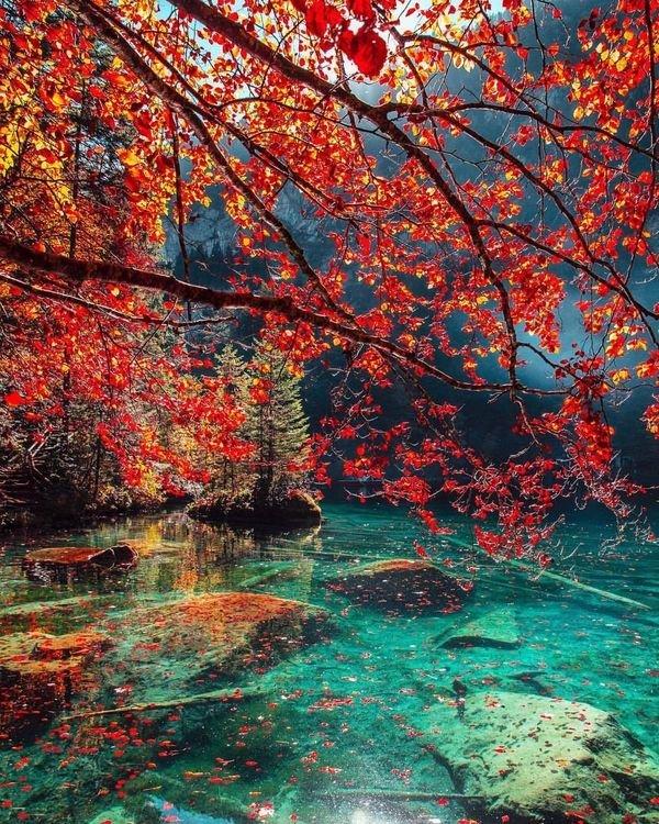 Осень в Албании день, животные, кадр, люди, мир, снимок, фото, фотоподборка