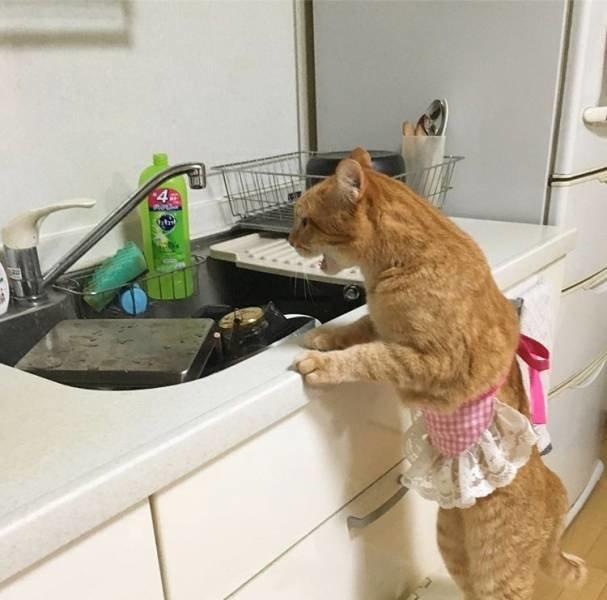 Опять посуду мыть! день, животные, кадр, люди, мир, снимок, фото, фотоподборка
