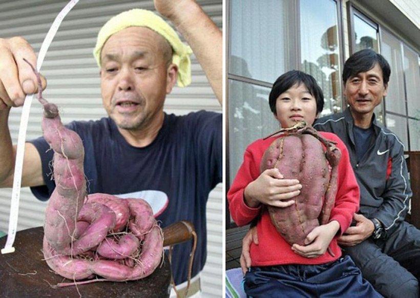также картинки мутации человека и животных этой компании