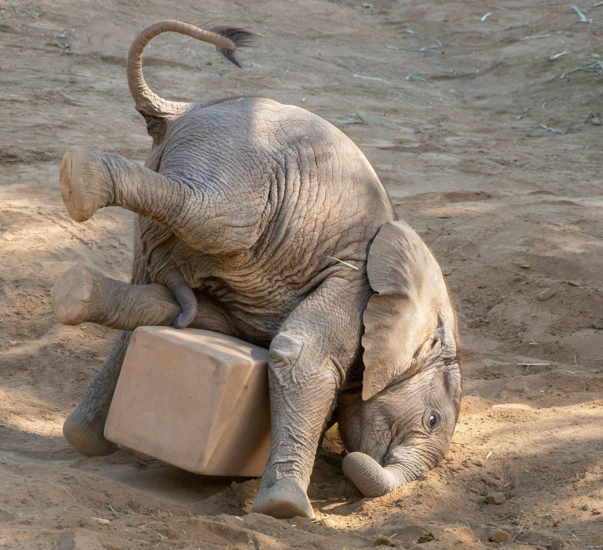Картинки со слоненком доброе утро, картинки среда открытка