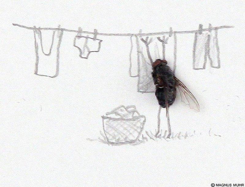 Открытки днем, картинки с мухами прикольные