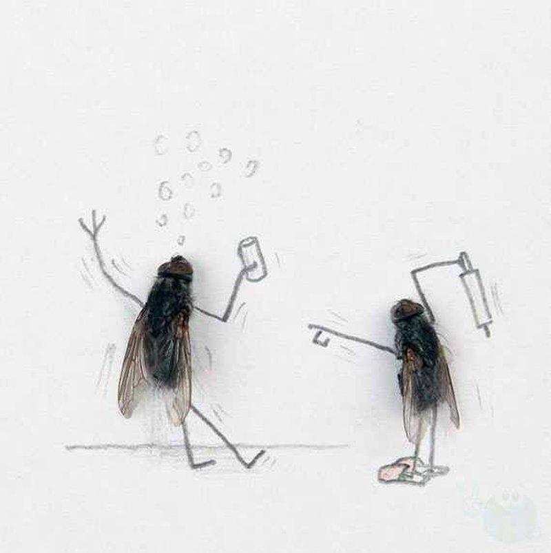Днем рождения, яндекс картинки смешные мухи нарисованные