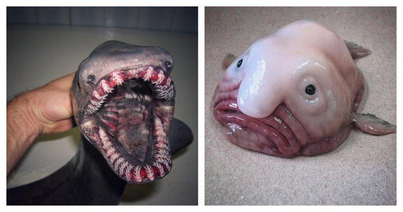 Фантастические твари: российский рыбак продолжает публиковать снимки обитателей морских глубин