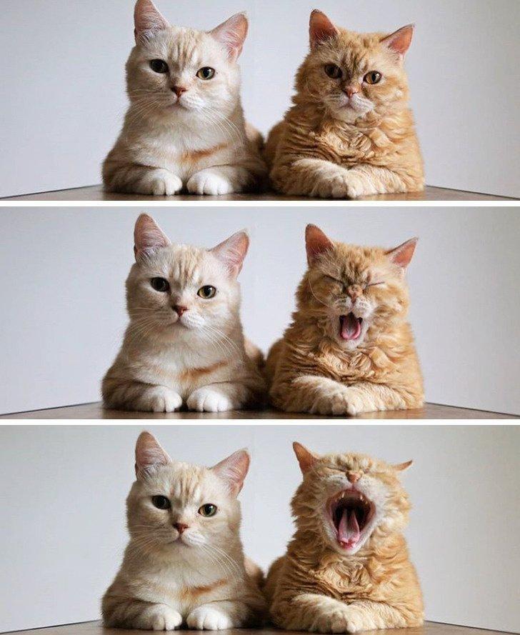 У каждого есть друг, который портит фото, и коты не исключение животные, картинки, коты