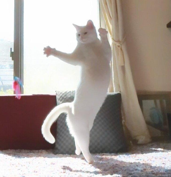 Невидимый партнер для танго животные, картинки, коты