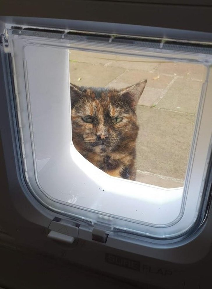 «Соседская кошка, похоже, не очень рада, что мы установили новый вход с микрочипом: теперь она не может своровать себе второй завтрак» животные, картинки, коты