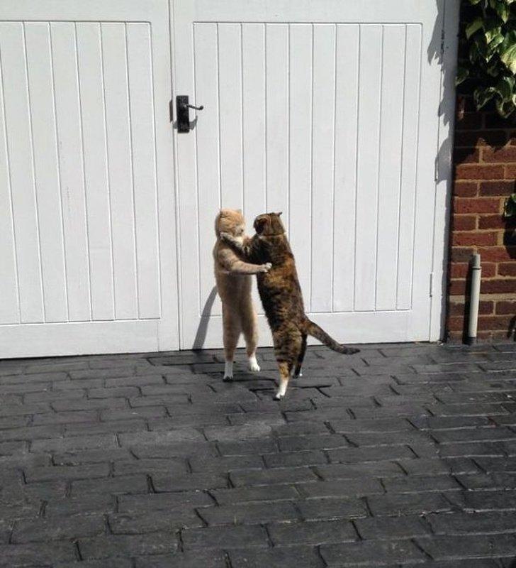 Прощание после дневной романтической прогулки животные, картинки, коты