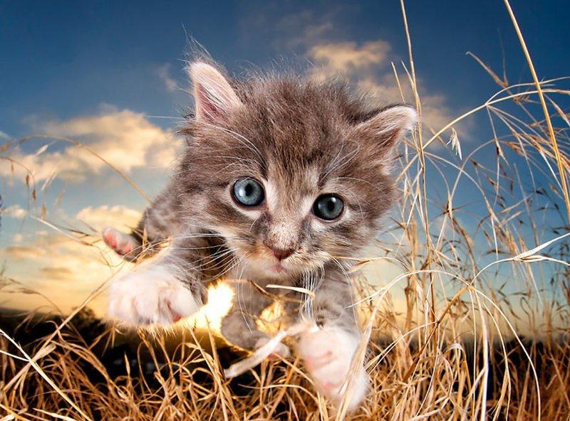 20 котов, у которых была всего секунда, чтобы прославиться. И они воспользовались ею сполна! животные, картинки, коты