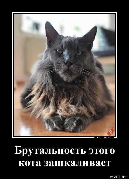 Брутальность этого кота зашкаливает демотиватор, демотиваторы, жизненно, картинки, подборка, прикол, смех, юмор