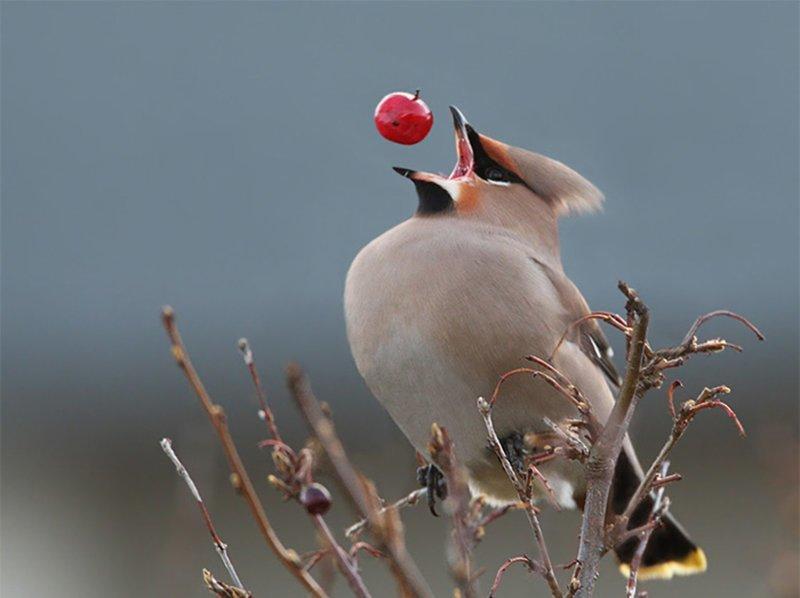 13. У птички обед в нужный момент, в тот самый момент, фото, юмор
