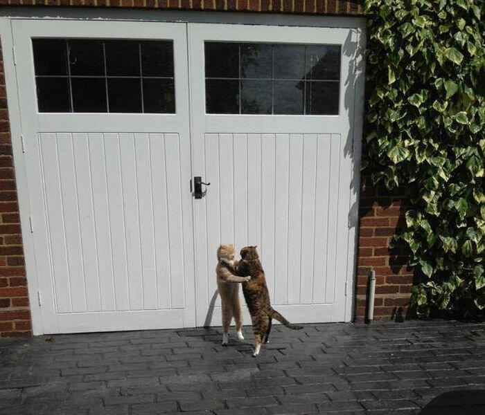 Как кошка с кошкой коты, подборка, разборка