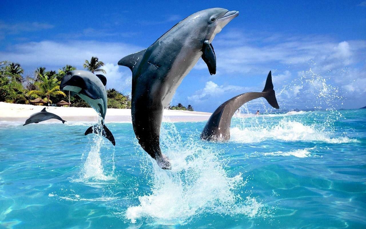 Красивые картинки с дельфинами на море, днем кошек картинки