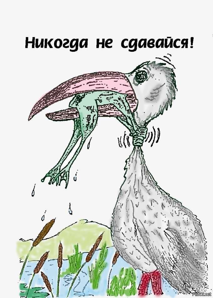 Надпись никогда не сдавайся картинки с лягушкой