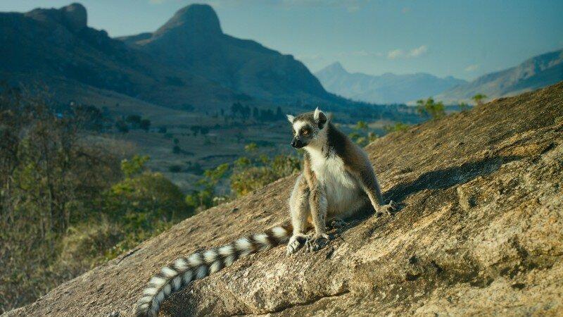 Вашингтон забирает Мадагаскар