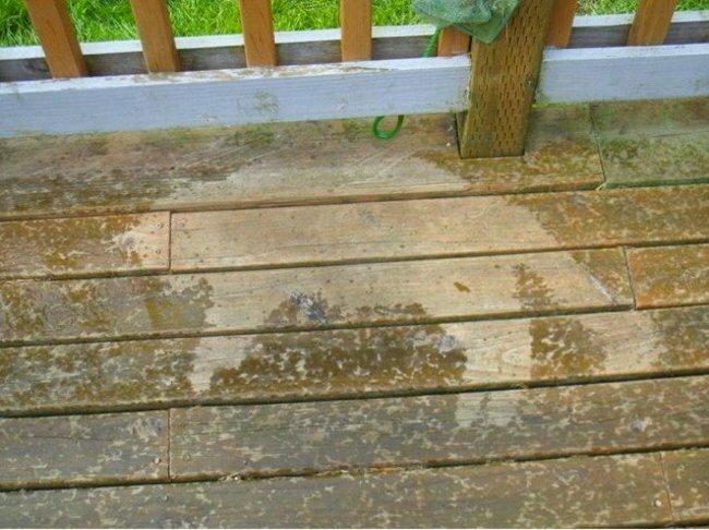 7. Шел дождь, но собаке не хотелось вставать ленивые люди, лень, прикол, смешно, фото