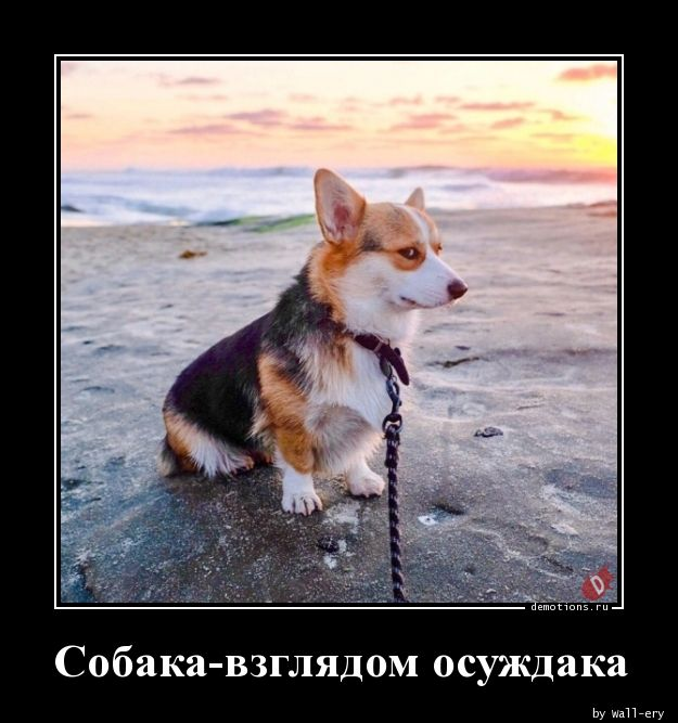 26781547305980-sobaka-vzglyadom-osu-demo