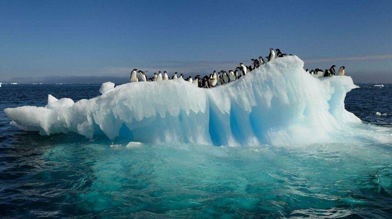 Антарктида теряет в 6 раз больше льда, чем в 1970-е, угрожая многометровым подъемом уровня моря