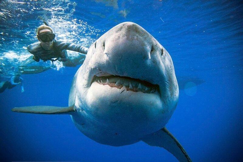 Акулы 3: Мегалодон – Эротические Сцены