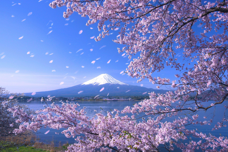обои на телефон япония природа смиренно