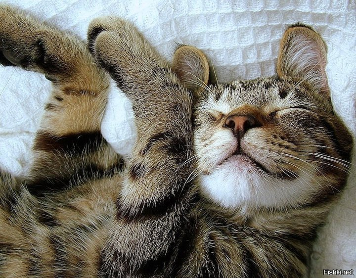 картинки кошки доброго утра ещё вариант