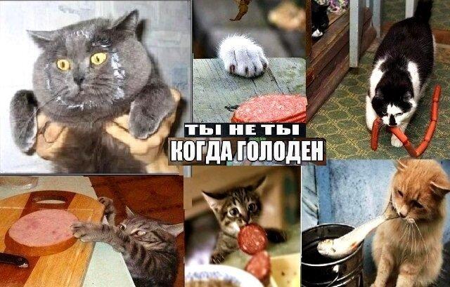 Подборка картинок с котами и про котов