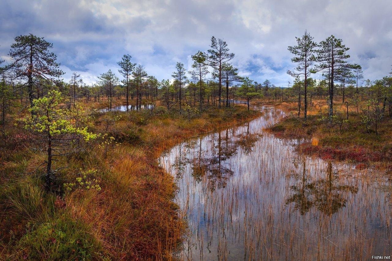 одинаковых фото болота чокморова после