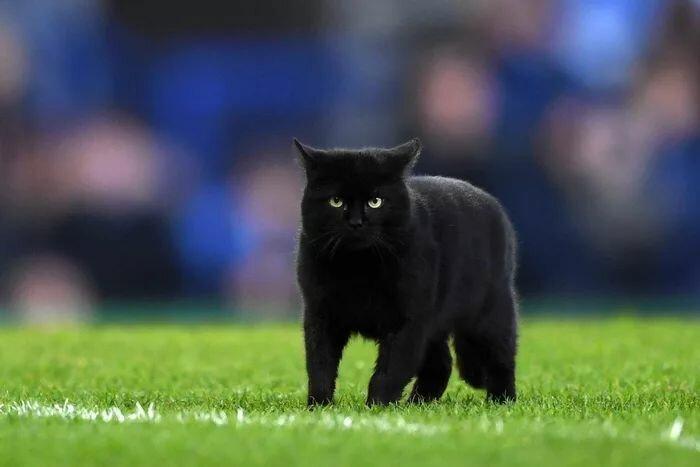 Видео: черный кот прервал футбольный матч и насмешил зрителей до слез