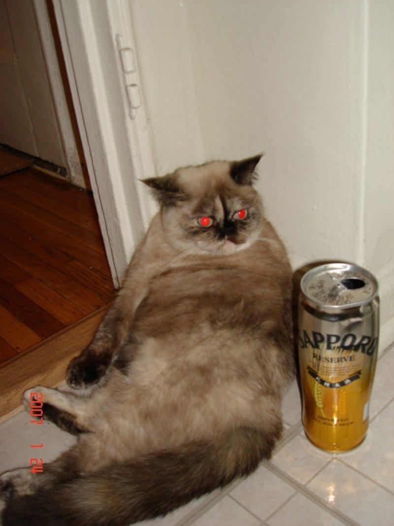 Картинки смешные пьяный кот