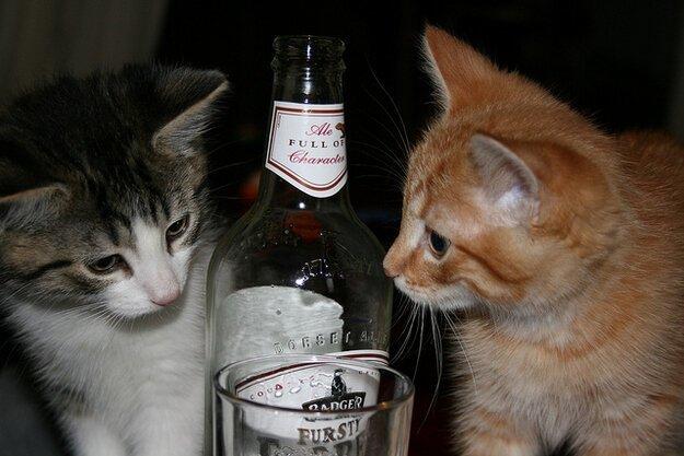 что бам картинка пьющие коты побеждает