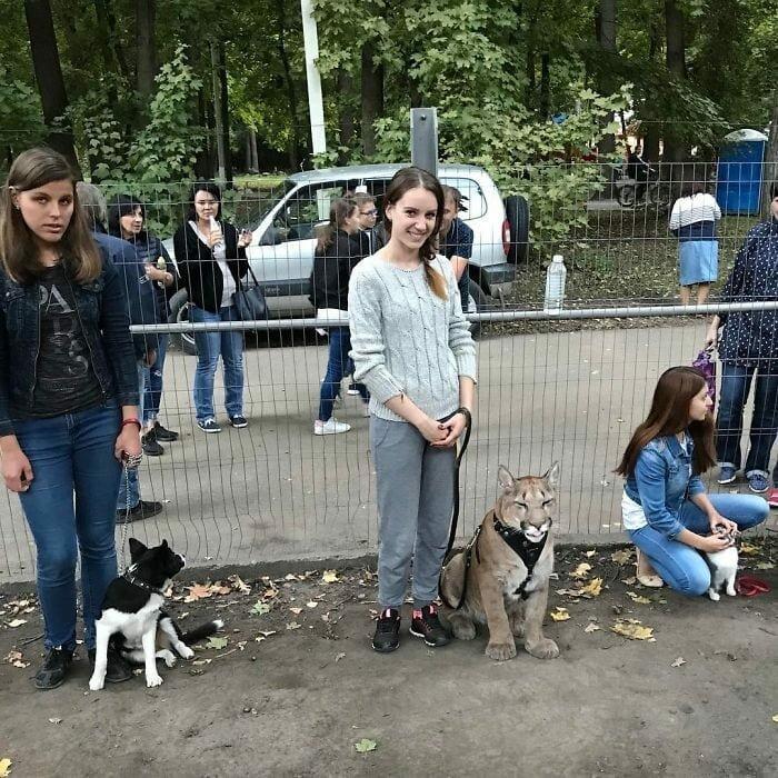 Они даже нашли школу дрессировки собак, которую Месси мог посещать, и там его научили выполнять около 10 команд домашний питомец, животные, зоопарк, месси, пенза, пума
