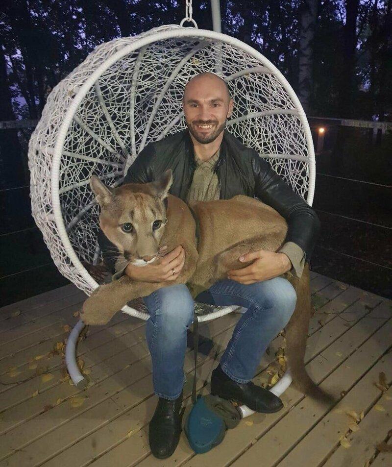 И смогли забрать 8-месячного котёнка домой домашний питомец, животные, зоопарк, месси, пенза, пума