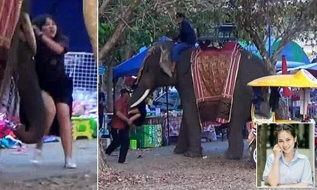 В Таиланде девочке-подростку чудом удалось уцелеть после того, как она стала жертвой рассвирепевшего слона