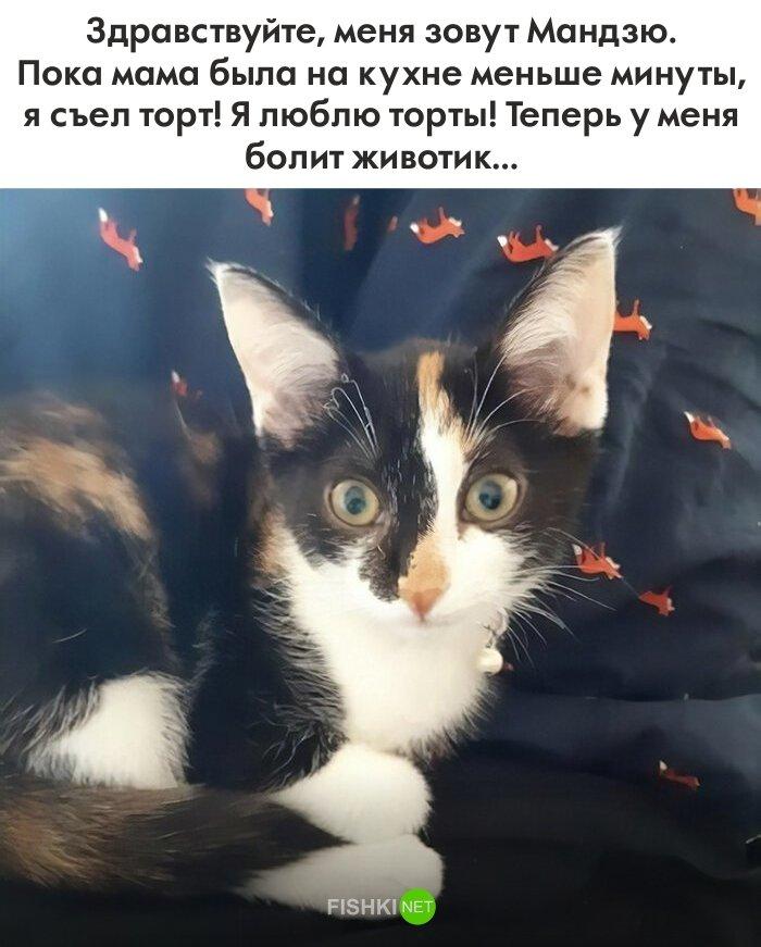 40 провинившихся котов, достойных общественного порицания