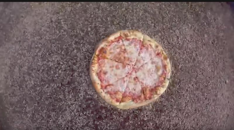 Ученые выяснили, с какой скоростью личинки мухи могут осилить 16-дюймовую пиццу