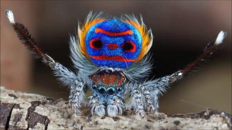 25 необыкновенных животных