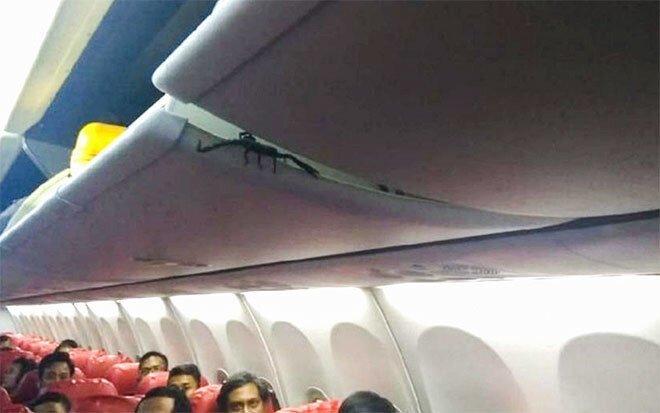 Скорпион пробрался в салон самолёта и всполошил пассажиров