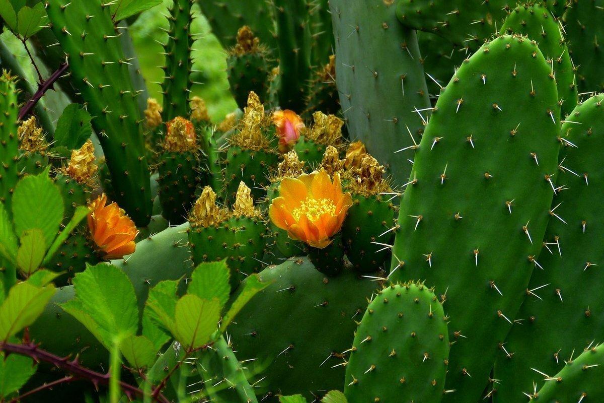 лесные кактусы картинки сталкеров, которые