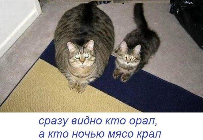 Картинки, смешные картинки про кошек с надписями с матом