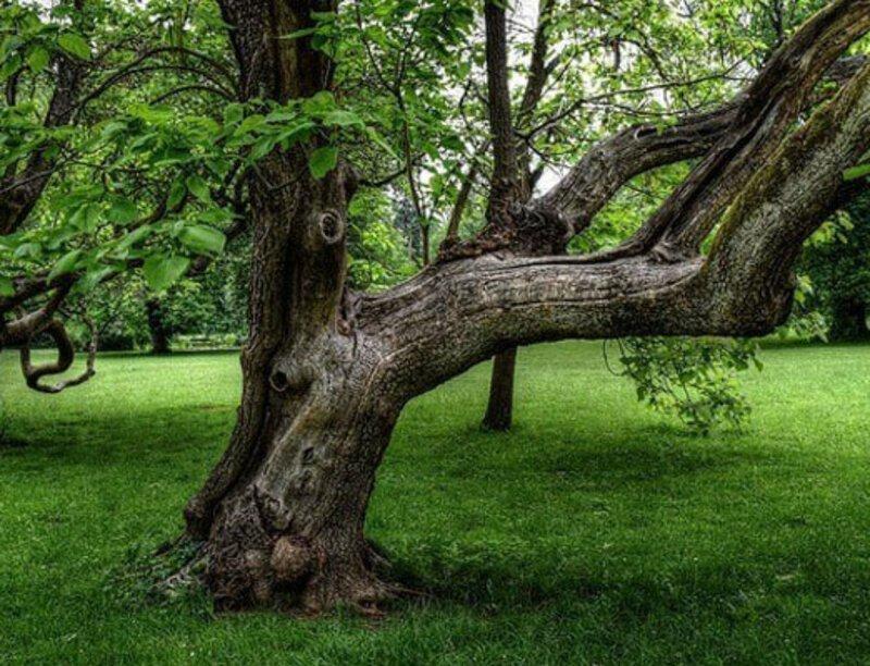 извилистое дерево фото колесо подушкой безопасности