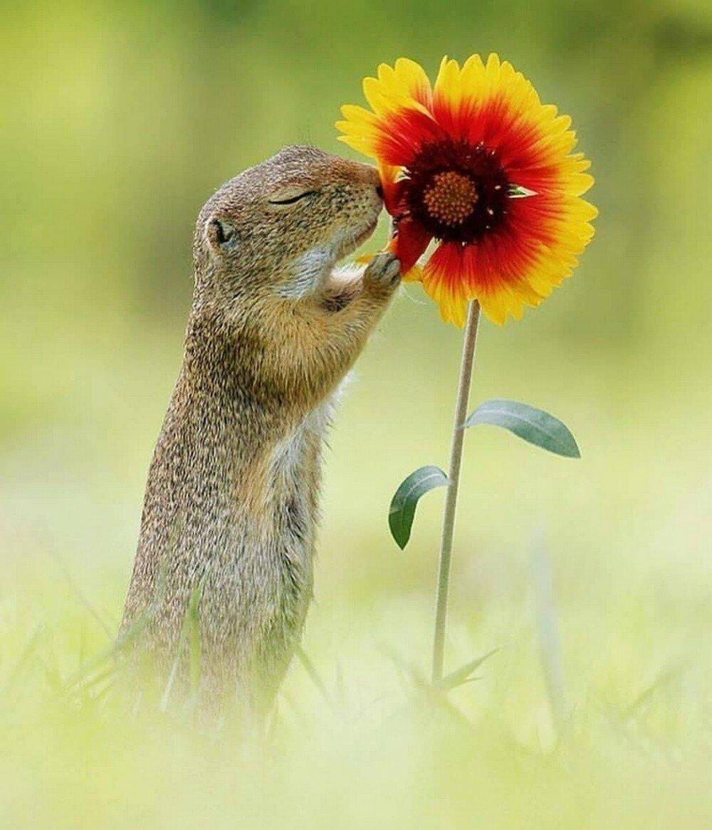 Хорошего настроения картинки животные