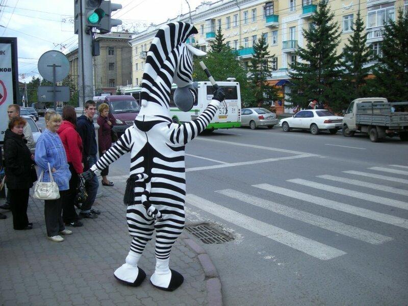 рисунке зебра костюм картинки сосочки расположены рядами