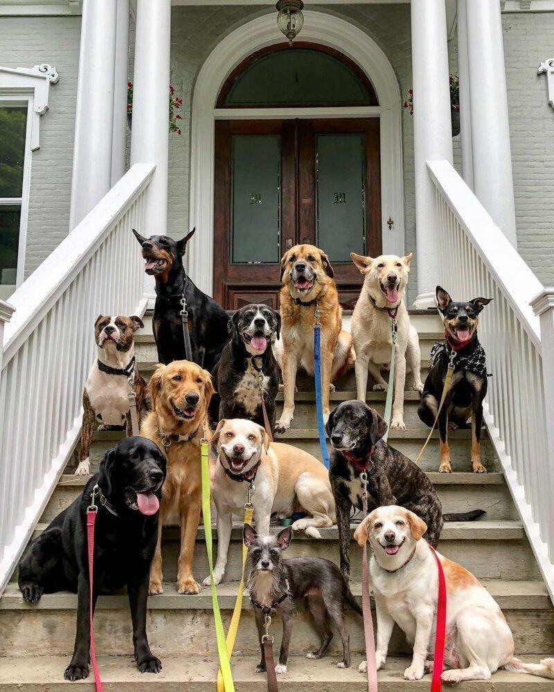 чего выбор собак с картинками всеядная рацион включает